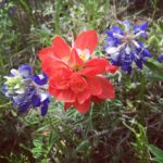 Happy first day of spring! Texas I love your wildflowershellip