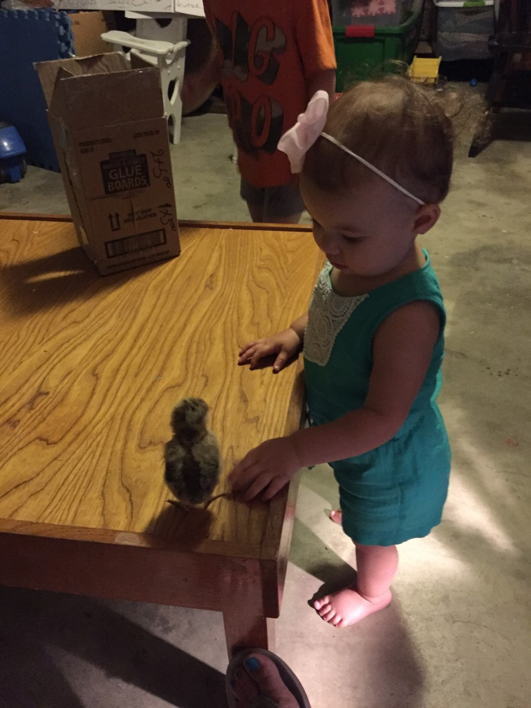 chicks-and-babies
