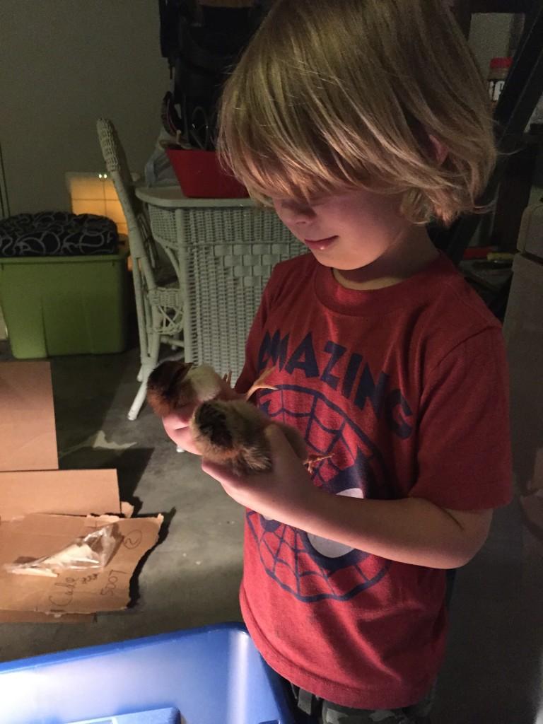 pet-chickens