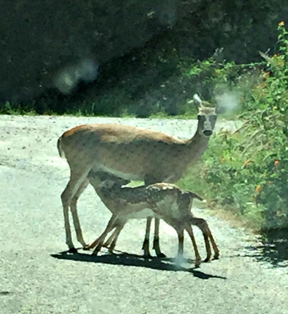 deer mama pk