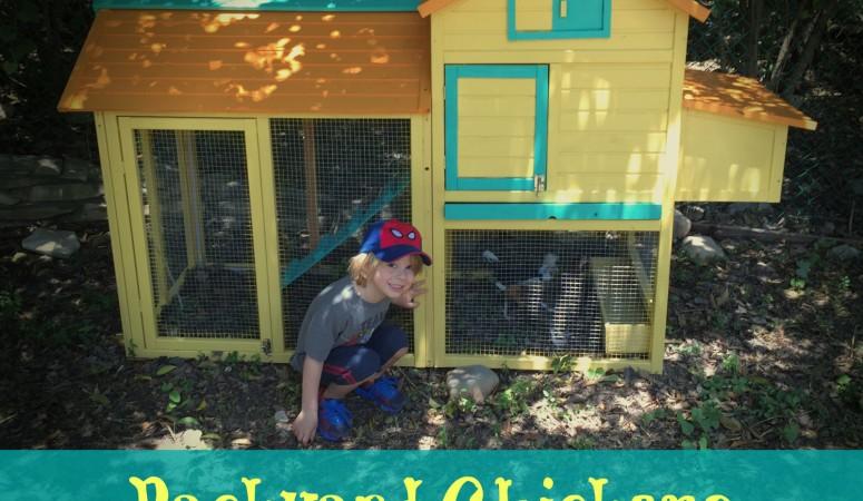 Backyard Chicken Farm Update