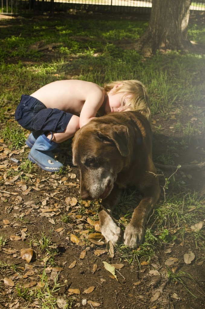 The best family pet to have with children, our old chocolate labrador retriever who is over a decade old and our heart.